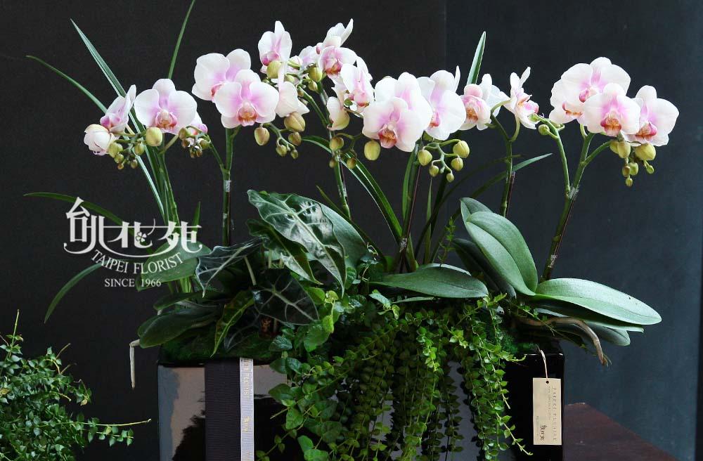 2016蘭花組合盆栽2