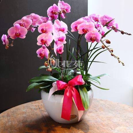 蘭花組合盆栽